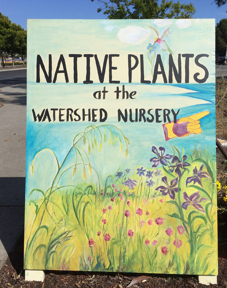 Contact The Watershed Nursery