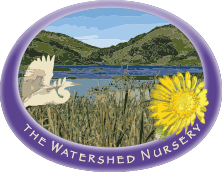 The Watershed Nursery Retina Logo